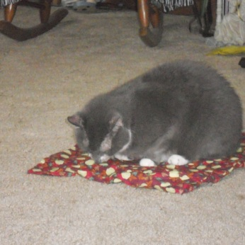 DAISY MAE ON HER APPLE CATNIP MAT SNIFFING IT.