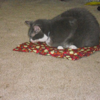 DAISY MAE LAYING ON HER APPLE CATNIP MAT.