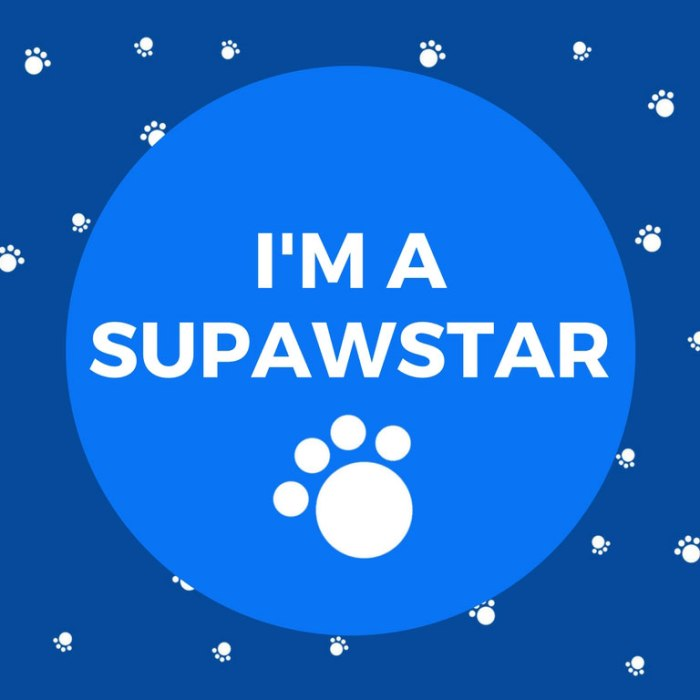 im-a-supawstar-pet-blogger