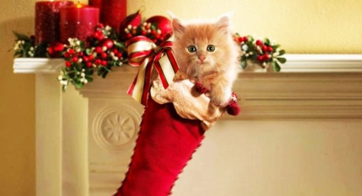 Christmas-Gift-Ideas-For-Your-Cat-11-830x450