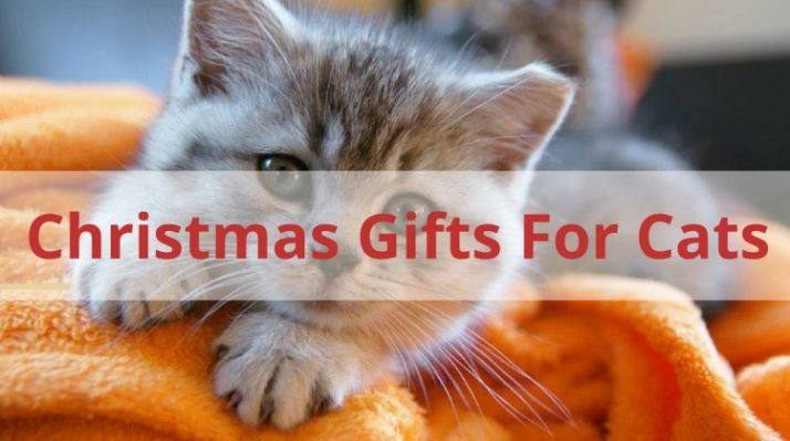 Christmas-Gifts-For-Cats-750x420